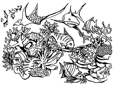 Coloring Pages Of Reef Fish | coral reef coloring download coral reef coloring