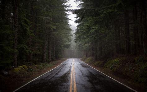 wallpaper dark road wallpaper forest road rain fog humidity pine morning