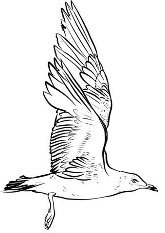 disegno gabbiano disegno di gabbiano sbatte le ali da colorare disegni da