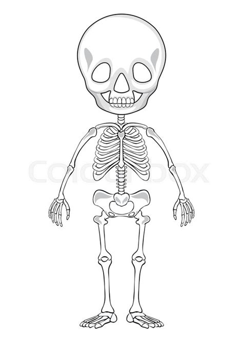 Outline drawing of a human skeleton | Stock vector