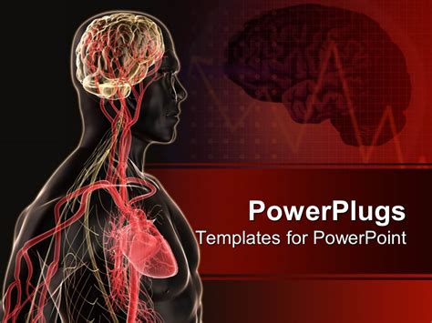 Anatomy Powerpoint Templates powerpoint template human anatomy with brain blood