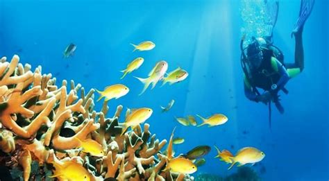 best dive spots in the world 12 best diving spots in the world for the water baby in you
