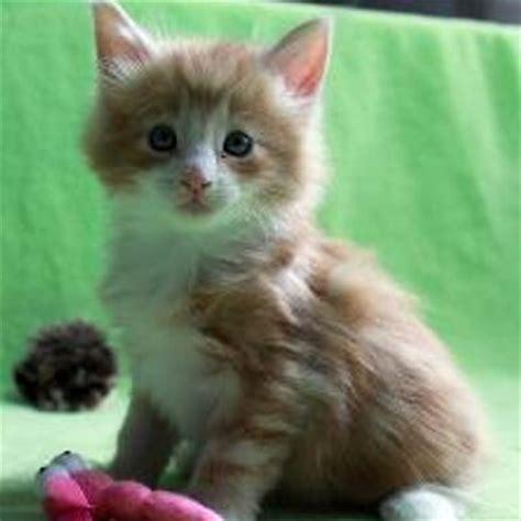 Hauskatzen Haus Katzen