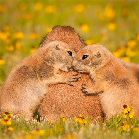 oklahoma wildlife animals pictures to pin on pinterest