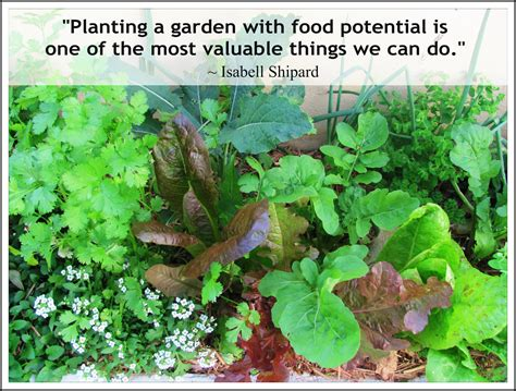 Vegetable Garden Quotes Quotes About Planting A Garden Quotesgram