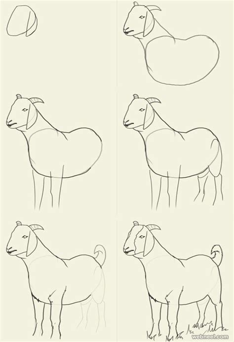 how to draw animals pencil drawing of goat images