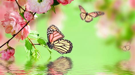 free download themes for cherry mobile w7 selection of the most beautiful butterfly wallpaper