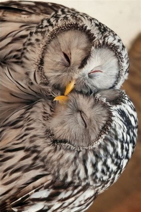owl lovers 17 best images about owls owls owls on pinterest long