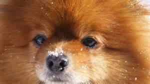 Small Dogs Www Imgkid Com The Image Kid Has It | small cute dogs www imgkid com the image kid has it