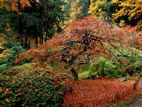 Gardening In Oregon Thom Zehrfeld Photography Japanese Gardens Portland