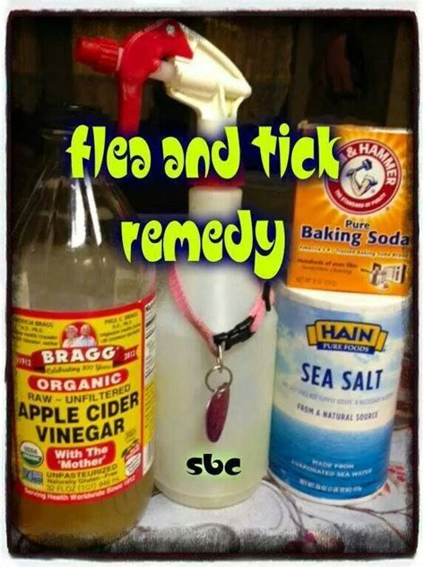 flea home remedy flea remedy crafts and dyi