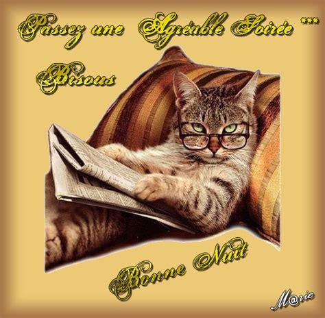 ipernity: Comme ce chat, je vous souhaite une bonne soirée
