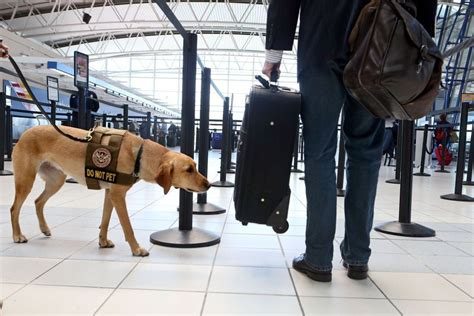 bomb dogs bomb detection dogs fail tests at large u s airports destination tips