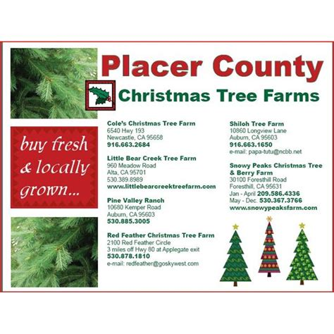 make your own christmas tree shop flyer