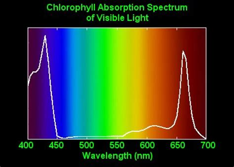 Absorption Of Light by Themarijuana Blogs Plant Light Absorption Chlorophyll