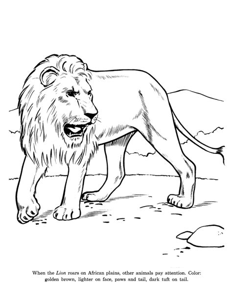 Animal Drawings Coloring Pages Lion Animal Drawing Coloring Pages