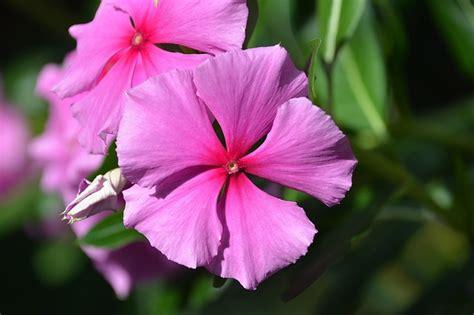 fiori facili da coltivare 5 fiori autunnali facili da coltivare tuttogreen