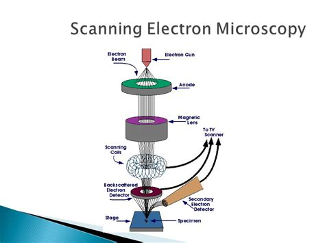sem tem in polymer characterization ppt