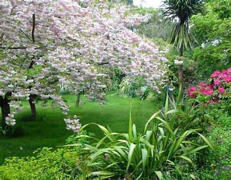 cherry tree journal october in my garden