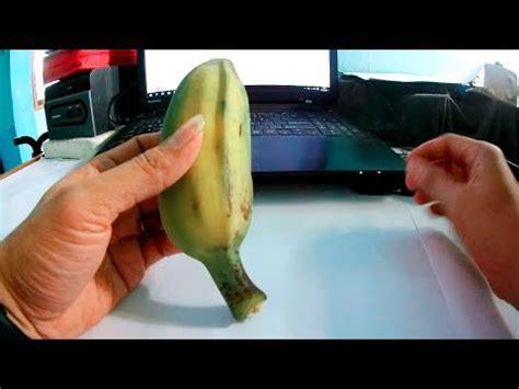 cara membuat umpan lele pake ikan mas umpan mancing ikan patin pake pisang