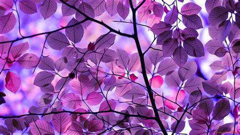 image gallery purple leaves