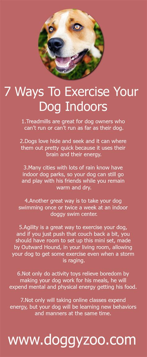7 Ways To Exercise With Your by 7 Ways To Exercise Your Indoors Doggyzoo Comdoggyzoo