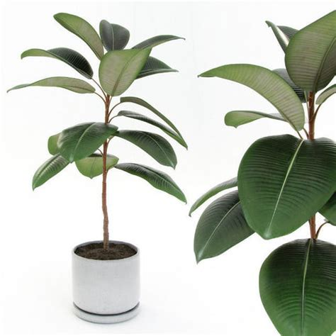 Contemporary Industrial ficus elastica decora small 3d model max obj 3ds fbx mtl