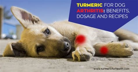 turmeric for dogs dosage turmeric for arthritis 8 evidence based benefits dosage and recipes
