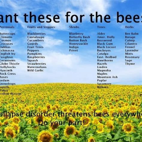 Bee Stinger Detox by 17 Best Images About Food News And Gmo S On