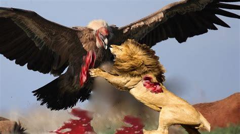 imagenes de aves asombrosas 10 aves de rapina mais letais e poderosas no mundo youtube
