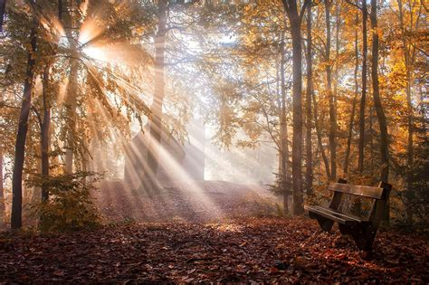 nature landscape park bench leaves sun rays fall