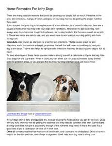 home remedy for itch home remedies for itchy dogs