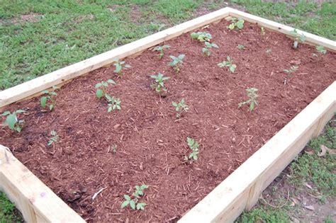 The Conservatory Simple Soil Recipe For Raised Beds Raised Bed Soil Mix Vegetable Garden