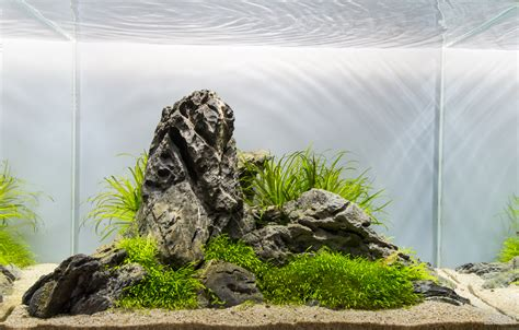 mot s aquascapes added aga 2015 aquascapes uk aquatic