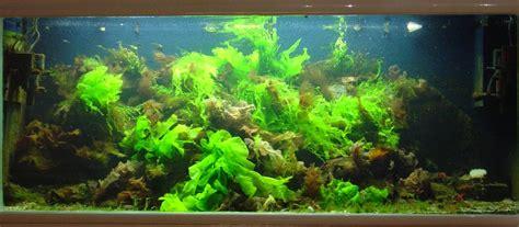 Lu Aquarium Aquascape aquascaping marin