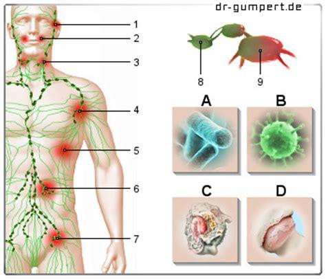 ohr innen geschwollen lymphknoten sind geschwollen wie gef 228 hrlich ist das