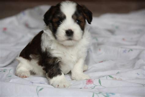 12 week puppy 12 week puppy by notkamalayx on deviantart