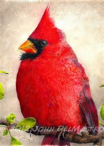 color cardinal aceo atc size print color pencil drawing cardinal bird by