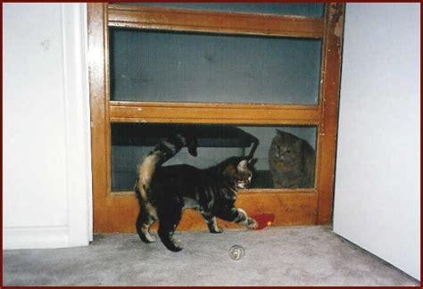 bedroom screen door linda