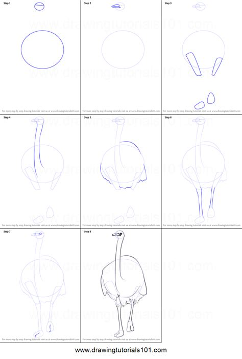 how to draw a emu printable step by step drawing sheet