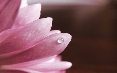 pink petals flower macro wallpaper 1024x768 resolution flower macro pink petals dew wallpapers flowers hd