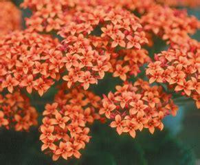 fiori arancioni nomi giardinaggio la rivista e il portale giardinaggio