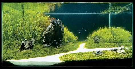 amano aquascape aquatic aquascaping aquarium