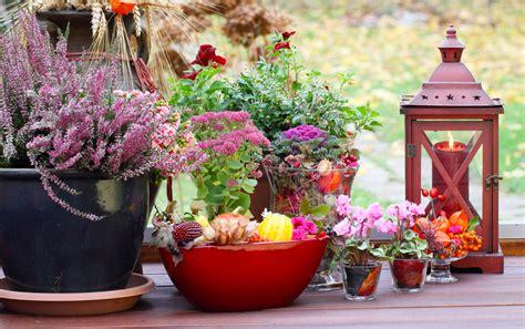 fiori da giardino autunnali fiori autunnali da balcone e giardino come scegliere