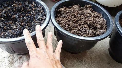 campuran tanah  baik  tanaman  pot youtube