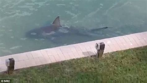 2 Bedroom Condo Myrtle Beach video of a shark swimming right up to a house in florida