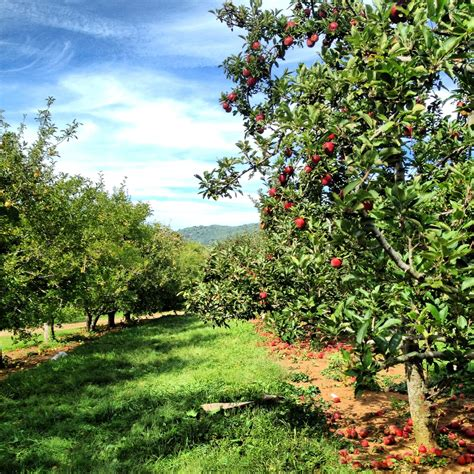 apple orchard falling for fall travel hike eat repeat