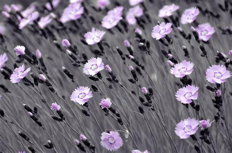 foto fiori bianco e nero sfondo quot fiori astratti colore e bianco nero quot 1920 x 1271