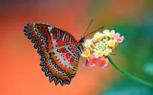 mariposas pics im 193 genes espectaculares las mariposas m 193 s bellas