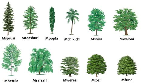 different types of trees swahili land aina za miti types of trees